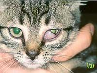 unterschiedliche pupillengröße krankheit