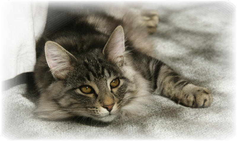 Kater Related Keywords & Suggestions - Kater Long Tail Keywords
